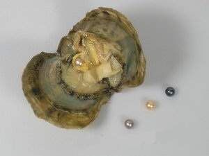 how to clean pearls from oysters